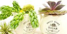 Canadian Succulents & Tropicals / Succulents & Succulent Arrangements from Fractaline Terrariums