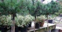 Plantera i krukor / Här kommer exempel på växter som klarar sig även över vintern