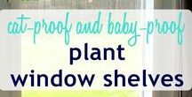 Great Shelving Solutions for Plants / Shelving Solutions for Succulent Growers