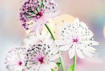 Rostliny-Flora