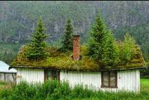 Zajímavé stromy a obydlí