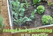 Gardening in Oregon City / Gardening tips and how to green up those thumbs!