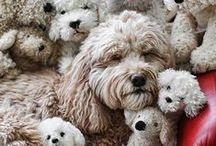 Doodle Doodle / Whether it be Labradoodle or a Goldendoodle........if it's a doodle then its doodling here ;-) / by victoria pass
