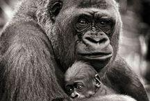 ♥ ANIMALS ♥ / Ils sont tous simplement craquant, irrésistible avec leur petite bouille d'amour
