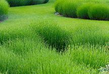 garden garten / modern ... minimalistisch ... buchs ... gräser ... gartenhaus ... gartenlaube ... pflanzen ... pflanzgefäße ... beschattung ... sichtschutz ... wege