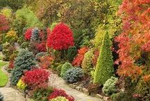 Landscaping Inspiration / Tips on making your garden stunning all year round, as well as being environmentally friendly. Dwarf conifers and Japanese maples hold the future of green landscaping with their drought tolerance and sustainable beauty. Here we help you figure out how to use them to their best advantage in your space, whether large or small.