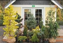 The Conifer Kingdom Plant Collection / The greatest selection of conifers ever offered as a package - an instant garden & an upgrade to the greatest landscapes.