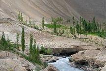 Kashmir/Ladakh / by Emily Vrydagh