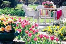 Garden / Growing vegetables and designing your outdoor space. / by Claire Collins