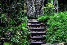 Salem+Roots=Home / by Michelle corneau