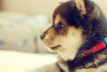 Pets / by Vivian Ong