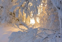 * Winter Wonders *