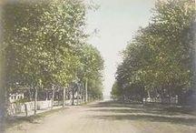 Bellport: Summer, 1900