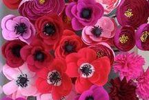 Cretan Poppies to inspire