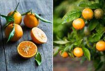 Cretan Oranges to inspire