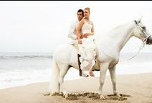 Horses & Wedding