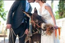 Donkey & Wedding