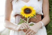 Sunflowers to inspire