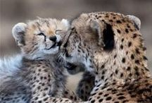 Animals and Their Mamas / . POSTING LIMIT OF TEN (10) PER DAY. It's all about animals and their mothers (or fathers) No extra long pictures. No animal abuse pictures.