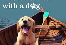 Doggie delights / All things dog related