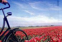 Amsterdam in bicicletta / L'Olanda e i suoi mulini a vento, i campi di tulipani e i paesaggi che sembrano usciti da un dipinto. Tutto questo in bicicletta, una vacanza all'insegna del benessere e dell'allegria! http://www.jonas.it/olanda_amsterdam_bicicletta_297.html