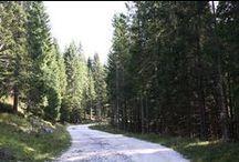 Altopiano di Asiago: a spasso con i Cimbri! / Una vacanza di trekking sull'Altopiano di Asiago. La mattina faremo belle passeggiate fra le montagne venete e al pomeriggio ci rilasseremo fra area benessere e buon cibo.