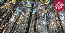 Casentino: Capodanno ed Epifania di trekking tra storia e foreste / Capodanno o Epifania di trekking in Toscana nelle foreste Casentinesi. Una divertente vacanza di gruppo accompagnati da una guida esperta in luoghi ricchi di storia e natura selvaggia, senza dimenticare i festeggiamenti per l'arrivo del nuovo anno.