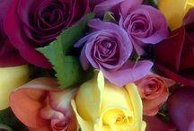 Flowers & Gardens Five * / by Lisa Fuselier