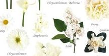 Ivory & White Flowers / selection of flowers in ivory and white