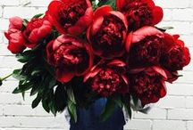 Red & Marsala Flowers / Different varieties of Red flowers