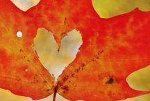 Love autumn / Autumn Autunno
