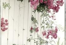 garden i want
