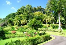 St. Vincent & the Grenadines.... / Land of my Birth / by Marsha-Ann Boyea