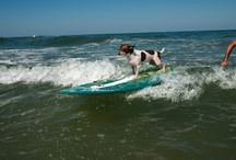 Dogs Love the Outer Banks / Fido deserves a little fun in the sun too!