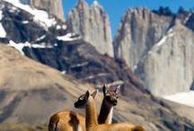 ► Chile