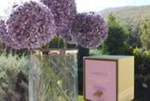 Candles / Reed Diffusers