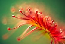 Little Monster Plants / Carnivorous plants are unique and gorgeous...We love them!