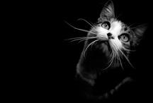 Crazy Cat Lady / by Paula S