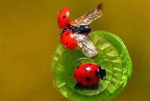 Ladybug starring...:-)