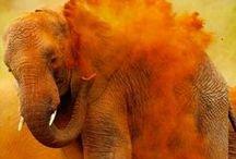 Elephants - my love!
