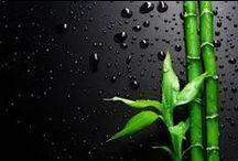 Bambu - levollisuuden symboli / symbol of tranquility