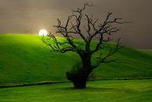 puun yksinäisyys / loneliness of a tree