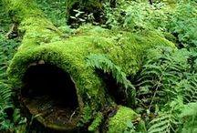 sammal, pehmeää vihreyttä