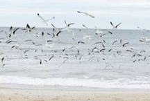 My Seaside / by Carol Bolton