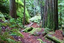 Mendocino County Redwoods