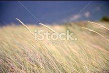 Close to Nature... in Pastel Tones / Gorgeous Natural Photos.... in Pastel Tones