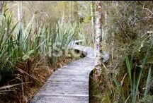 Path Scape Stock Photography / Beautiful Pathway Photography for sale here.....Wooden Paths....Boardwalks......Let them lead the way....