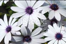 Floral Backgrounds / Stunning Full Frame Composition of Flora... Beautiful Close-Ups... 4:3 Ratio.....