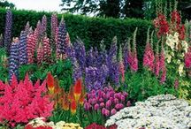 Garden Inspiration / For Our Green Thumb