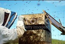 Apiculture New Zealand / Stunning Stock Imagery of Apiculture in Aotearoa... from Hives to Honey... world famous anti-bacterial alternative health giving Manuka honey... and pollination...